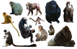 Insieme dei primati fotografie stock
