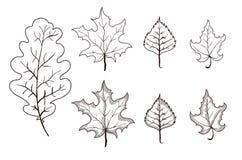 Insieme dei profili delle foglie Immagini Stock Libere da Diritti