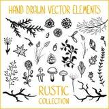 Insieme dei rami, delle foglie, dei funghi e dei fiori decorativi Fotografia Stock