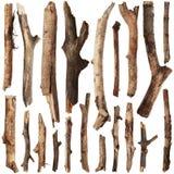 Insieme dei rami di albero Immagini Stock