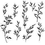 Insieme dei rami di albero con le foglie Fotografie Stock