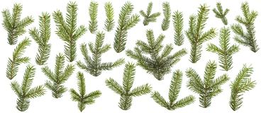 Insieme dei rami verdi freschi del pino isolati Fotografia Stock Libera da Diritti