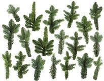Insieme dei rami verdi freschi del pino isolati Fotografie Stock