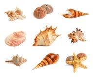 Insieme dei seashells Immagini Stock Libere da Diritti