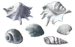 Insieme dei seashells Illustrazione disegnata a mano di vettore royalty illustrazione gratis