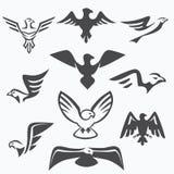 Insieme dei simboli dell'aquila Fotografia Stock