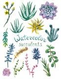 Insieme dei succulenti dell'acquerello Fotografie Stock Libere da Diritti