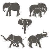 Insieme del b&w degli elefanti Fotografia Stock