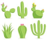 Insieme del cactus Fotografia Stock