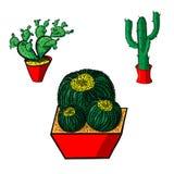Insieme del cactus Immagini Stock Libere da Diritti