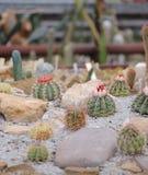 Insieme del cactus Fotografie Stock