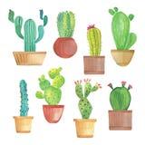Insieme del cactus dell'acquerello Fotografia Stock