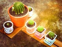 Insieme del cactus e di bella luce del sole Fotografia Stock
