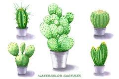 Insieme del cactus Illustrazione dell'acquerello Fotografia Stock