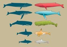 Insieme del delfino e della balena Fotografie Stock
