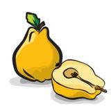 Insieme del disegno di schizzo di frutti della cotogna royalty illustrazione gratis