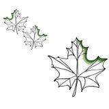 Insieme del disegno di vettore della foglia Foglie isolate dell'albero Illustrazione incisa di erbe di stile Schizzo del prodotto Fotografie Stock Libere da Diritti