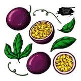 Insieme del disegno di vettore del frutto della passione r Oggetti del passionfruit di estate illustrazione di stock