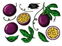 Insieme del disegno di vettore del frutto della passione r Oggetti del passionfruit di estate illustrazione vettoriale