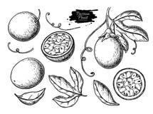 Insieme del disegno di vettore del frutto della passione r Passionfruit inciso di estate illustrazione di stock