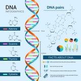 Insieme del DNA Infographics Fotografia Stock Libera da Diritti