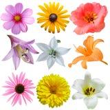 Insieme del fiore Fotografie Stock