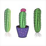 Insieme del fiore del cactus I cactus disegnati a mano si dirigono la raccolta della pianta Immagini Stock Libere da Diritti