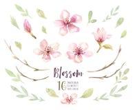 Insieme del fiore del fiore di boho dell'acquerello Decorazione di estate o della primavera Fotografia Stock