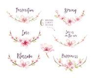 Insieme del fiore del fiore di boho dell'acquerello Decorazione di estate o della primavera Fotografia Stock Libera da Diritti