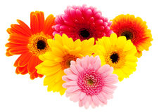 Insieme del fiore della margherita del Gerbera Fotografie Stock