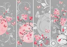 Insieme del fiore di ciliegia Fotografia Stock Libera da Diritti