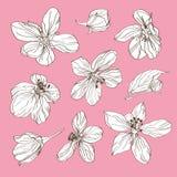 Insieme del fiore di ciliegia Fotografie Stock Libere da Diritti