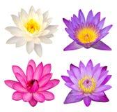 Insieme del fiore di loto isolato su bianco Fotografia Stock