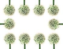 Insieme del fiore di Ornamental Onion del gladiatore dell'allium isolato Immagini Stock