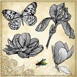 Insieme del fiore e della farfalla del disegno della mano Immagini Stock