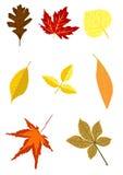 Insieme del fogliame di autunno Illustrazione di Stock