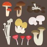 Insieme del fungo Fotografia Stock Libera da Diritti