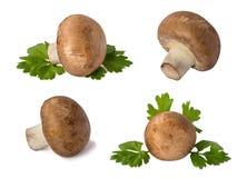 insieme del fungo prataiolo dei funghi isolato su bianco Fotografia Stock Libera da Diritti