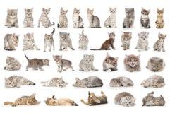 Insieme del gatto Fotografia Stock Libera da Diritti