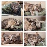 Insieme del gatto di sonno Fotografie Stock