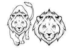 Insieme del leone Immagini Stock