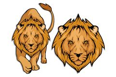 Insieme del leone Fotografie Stock Libere da Diritti