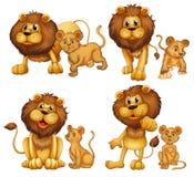 Insieme del leone Fotografia Stock Libera da Diritti