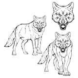 Insieme del lupo Immagini Stock Libere da Diritti