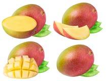 Insieme del mango isolato su fondo bianco Fotografia Stock