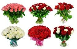 Insieme del mazzo delle rose colorate multi isolate sul backgrou bianco fotografia stock libera da diritti