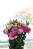 Insieme del mazzo delle rose rosa e bianche Fotografia Stock