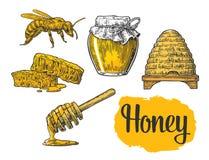 Insieme del miele Barattoli di miele, ape, alveare, trifoglio, favo Illustrazione incisa annata di vettore Fotografia Stock Libera da Diritti