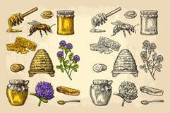Insieme del miele Barattoli di miele, ape, alveare, trifoglio, favo Illustrazione incisa annata di vettore illustrazione di stock
