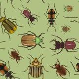 Insieme del modello delle illustrazioni dello scarabeo Fotografie Stock Libere da Diritti